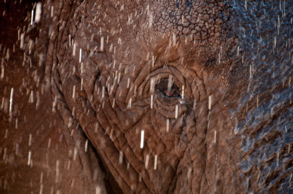 Water droplets sprinkle down over the elephant